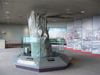 Exhibit of huge tree snapped off horizontally