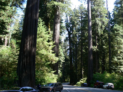 My first visit to a giant Redwood grove on hwy 101